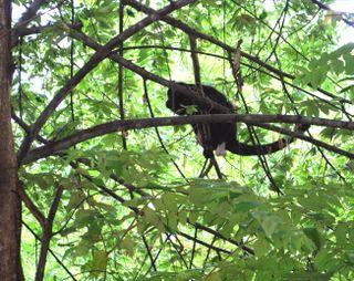 Monkey One